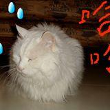catcat44