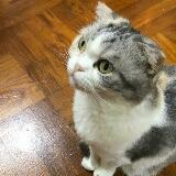 timtim_cat
