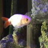 fish2117