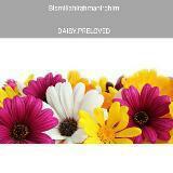 daisy.preloved