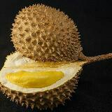 durianian