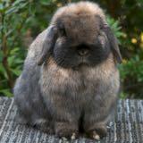 bunnyfeeds