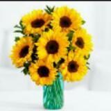 sunflower_82