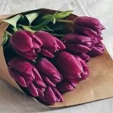 tushi_tulip