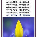 zhangdangqia