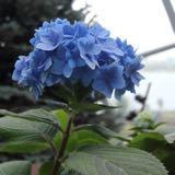 shania_blue