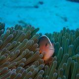 mollymollyfish
