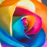 wahafini_warnas