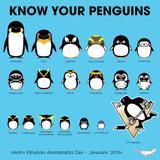 penguin31