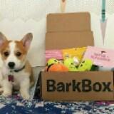 barkboxshoppy
