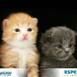 kitten_meat