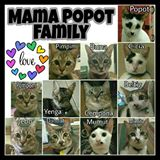 mamapopot_homeshop