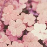 pinkclovers88
