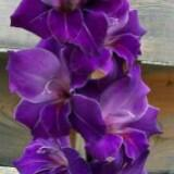timelessorchids