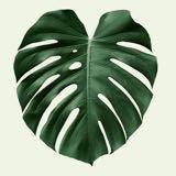 madaboutplants
