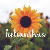 helianthus.id