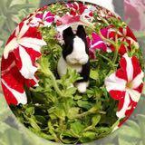 bunny428