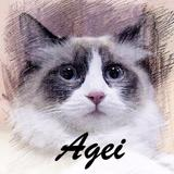 agei.pets