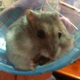hamsterboy88
