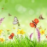 butterfly.99