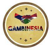 gambinesia