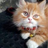 catsy.my