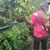 naturegogreend