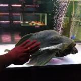 direct.aquarium9996