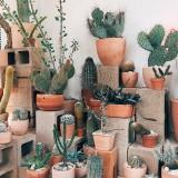 succulentsnsuch