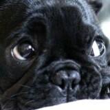 mattblackdog