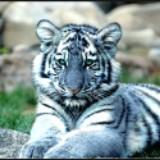 tigerhu07