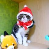 ball_meow
