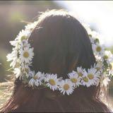 _daisies_