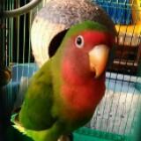 parrot53