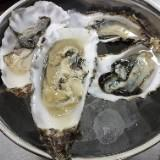 oyster_oyster