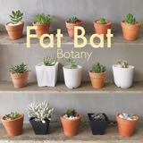 fatbat_botany