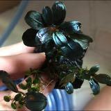 sgaquaticplants