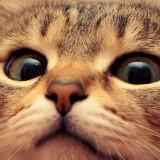 mobile_cat