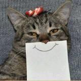 smilemeow