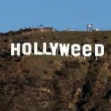 hollyweeds