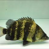 fishtan88