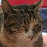 cat1028
