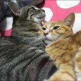 sallykidcat