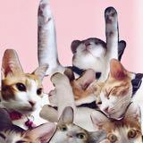 bucketofcatss__