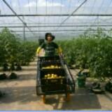 gardenese