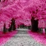 pink_autumn