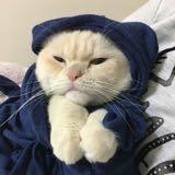 gatos29