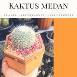 kaktusmedan