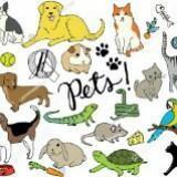 anz_pets_lifestyle