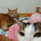 cat_lover_0000